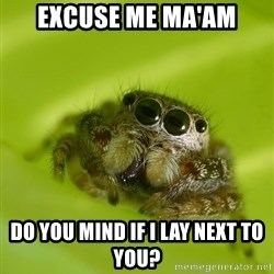 The Spider Bro - Excuse me Ma'am Do you mind if I lay next to you?