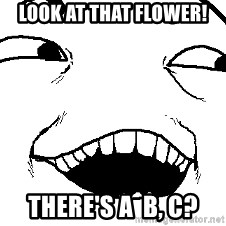 I see what you did there - Look at that flower! There's a  b, c?