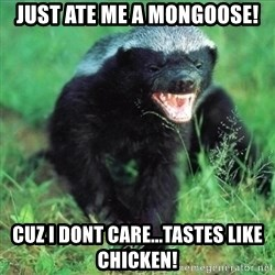 Honey Badger Actual - Just ate me a mongoose! Cuz I dont care...tastes like chicken!