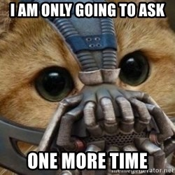 bane cat - I am only going to ask one more time