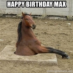 Hole Horse - Happy Birthday Max