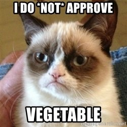 not funny cat - I do *not* approve vegetable
