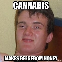 Really Stoned Guy - Cannabis makes bees from honey