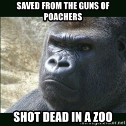 Rustled Jimmies - saved from the Guns of Poachers Shot dead in a zoo