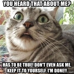 scared cat - YOU HEARD THAT ABOUT ME? HAS to be true! Don't even ask me. Keep it to yourself. I'm DONE!!