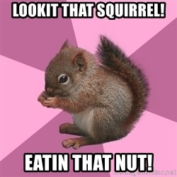 Shipper Squirrel - lookit that squirrel! Eatin that nut!