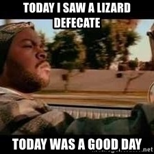 It was a good day - Today I saw a lizard defecate Today was a good day