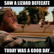 It was a good day - Saw a lizard defecate Today was a good day