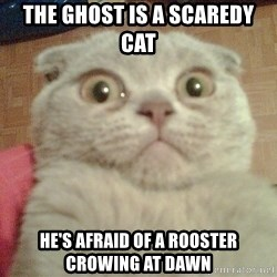 GEEZUS cat - The Ghost is a scaredy cat He's afraid of a rooster crowing at dawn