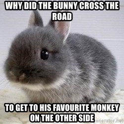ADHD Bunny - Why did the bunny cross the road To get to his favourite monkey on the other side