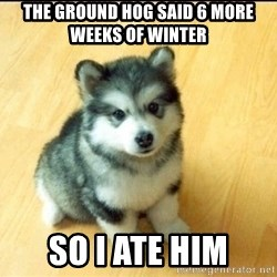 Baby Courage Wolf - the ground hog said 6 more weeks of winter so I ate him