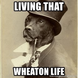 rich dog - Living that Wheaton life