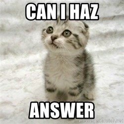 Can haz cat - Can I haz answer