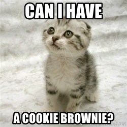 Can haz cat - can i have a cookie brownie?