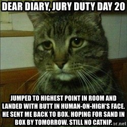 Depressed cat 2 - Dear diary, jury duty day 20 Jumped to highest point in room and landed with butt in human-on-high's face. He sent me back to box. Hoping for sand in box by tomorrow. Still no catnip.