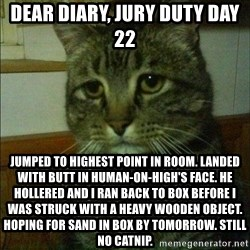 Depressed cat 2 - Dear diary, jury duty day 22 Jumped to highest point in room. Landed with butt in human-on-high's face. He hollered and I ran back to box before I was struck with a heavy wooden object. Hoping for sand in box by tomorrow. Still no catnip.