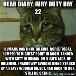 Depressed cat 2 - Dear diary, jury duty day 22 Humans continue talking. Bored today. Jumped to highest point in room. Landed with butt in human-on-high's face. He hollered. I narrowly avoided being struck by a heavy wooden object. Ran back to box. Still no catnip.