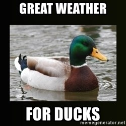 good advice duck - Great weather  for ducks