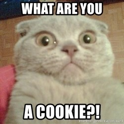 GEEZUS cat - WHAT ARE YOU A COOKIE?!