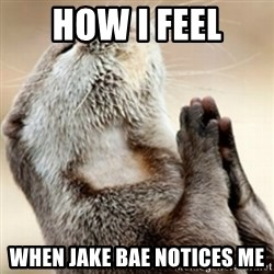 Praying Otter - How I feel When Jake Bae notices me