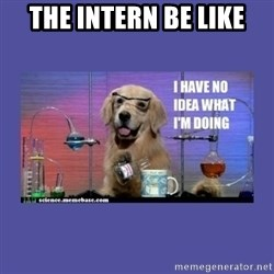 I don't know what i'm doing! dog - The intern be like