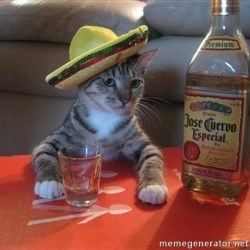 Mexican cat drunk  -