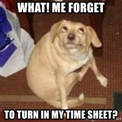 Oh You Dog - what! me forget to turn in my time sheet?