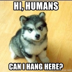 Baby Courage Wolf - Hi, humans can i hang here?
