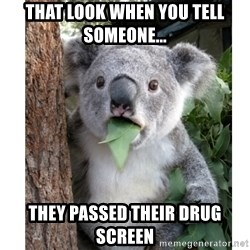 surprised koala - That look when you tell someone... They passed their drug screen