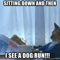 newspaper cat realization - Sitting down and then I SEE A DOG RUN!!!👍