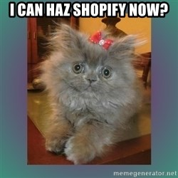cute cat - I can haz Shopify now?