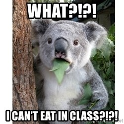 surprised koala - What?!?! I can't eat in class?!?!