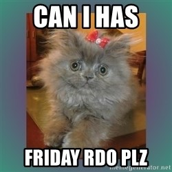 cute cat - Can I has  Friday RDO plz