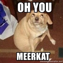 Oh You Dog -    Oh You       Meerkat