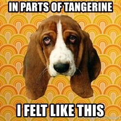 SAD DOG - In parts of Tangerine I felt like this