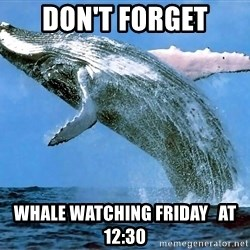 whaleeee - don't forget whale watching Friday   at 12:30
