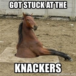 Hole Horse - got stuck at the  knackers