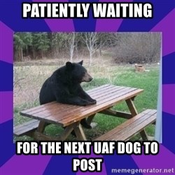 waiting bear - Patiently waiting For the next UAF dog to post