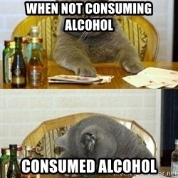 Poker Cat - when not consuming alcohol CONSUMED ALCOHOL