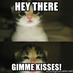 Adorable Kitten - hey there gimme kisses!