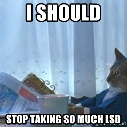 newspaper cat realization - I should  Stop taking so much LSD
