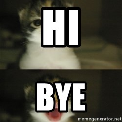 Adorable Kitten - hi bye