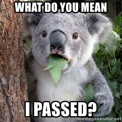 Koala wow - What do you mean I passed?