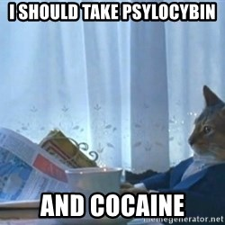 newspaper cat realization - i should take psylocybin and cocaine