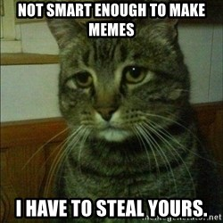 Depressed cat 2 - Not smart enough to make memes I have to steal yours.