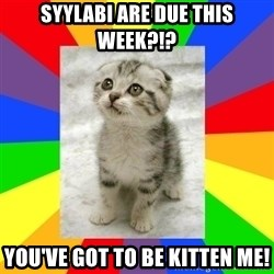 Cute Kitten - Syylabi are due this week?!? You've got to be kitten me!