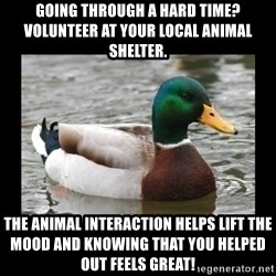 advice mallard - Going through a hard time? Volunteer at your local animal shelter.  The animal interaction helps lift the mood and knowing that you helped out feels great!