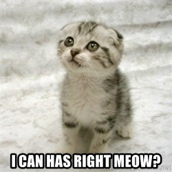 Can haz cat -  I can has right meow?