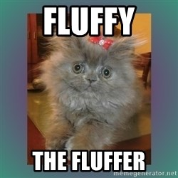 cute cat - fluffy the fluffer