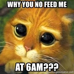 Shrek cat 2 - why you no feed me  At 6am???